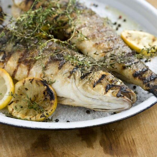 سمك دينيس