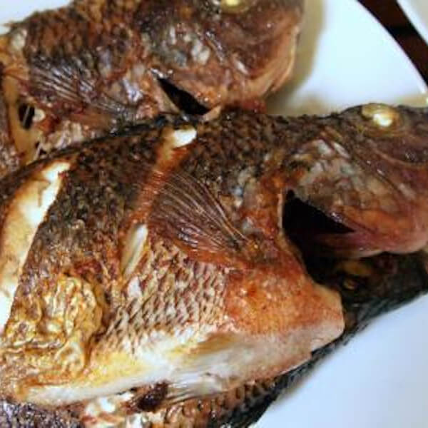(tilapia (St .peter ' fish